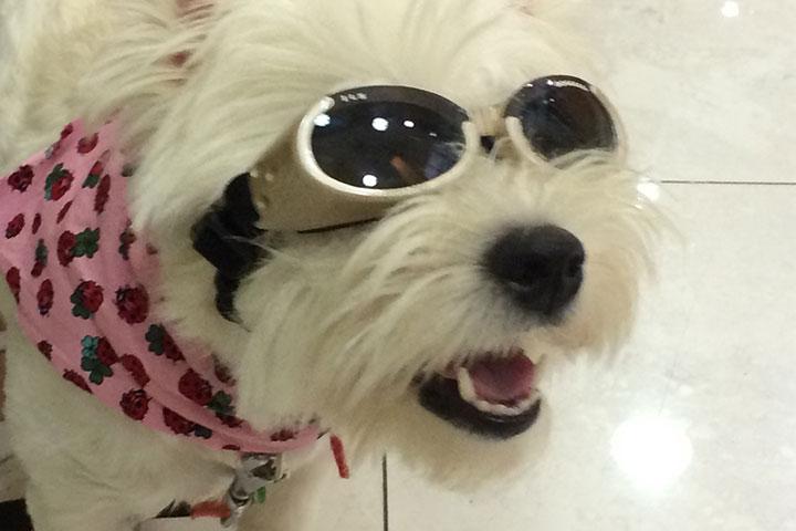 Χρειάζεται ο σκύλος μου γυαλιά;